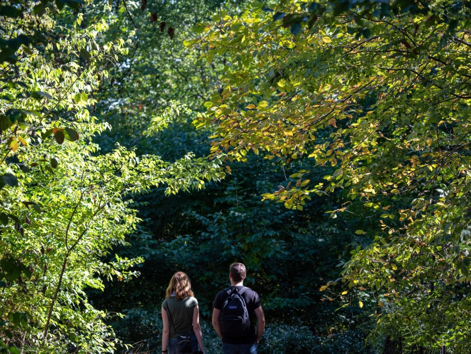 A couple under a canopy of sunlit trees in the North Woods