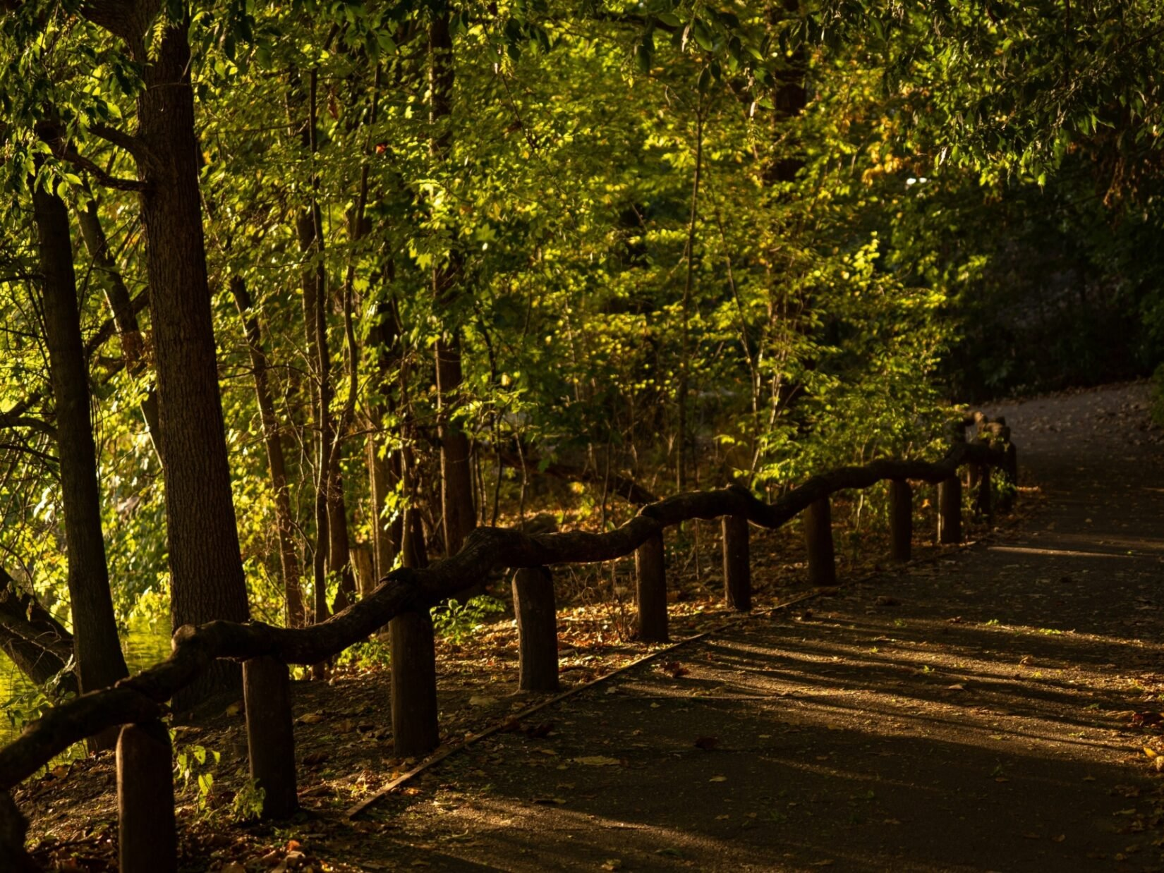 A deeply-shadowed rustic path through the Ramble
