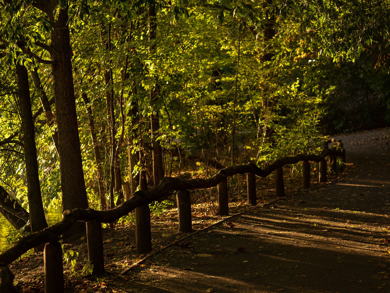 A path along the Lake in the Ramble with dramatic shadows cast in late afternoon