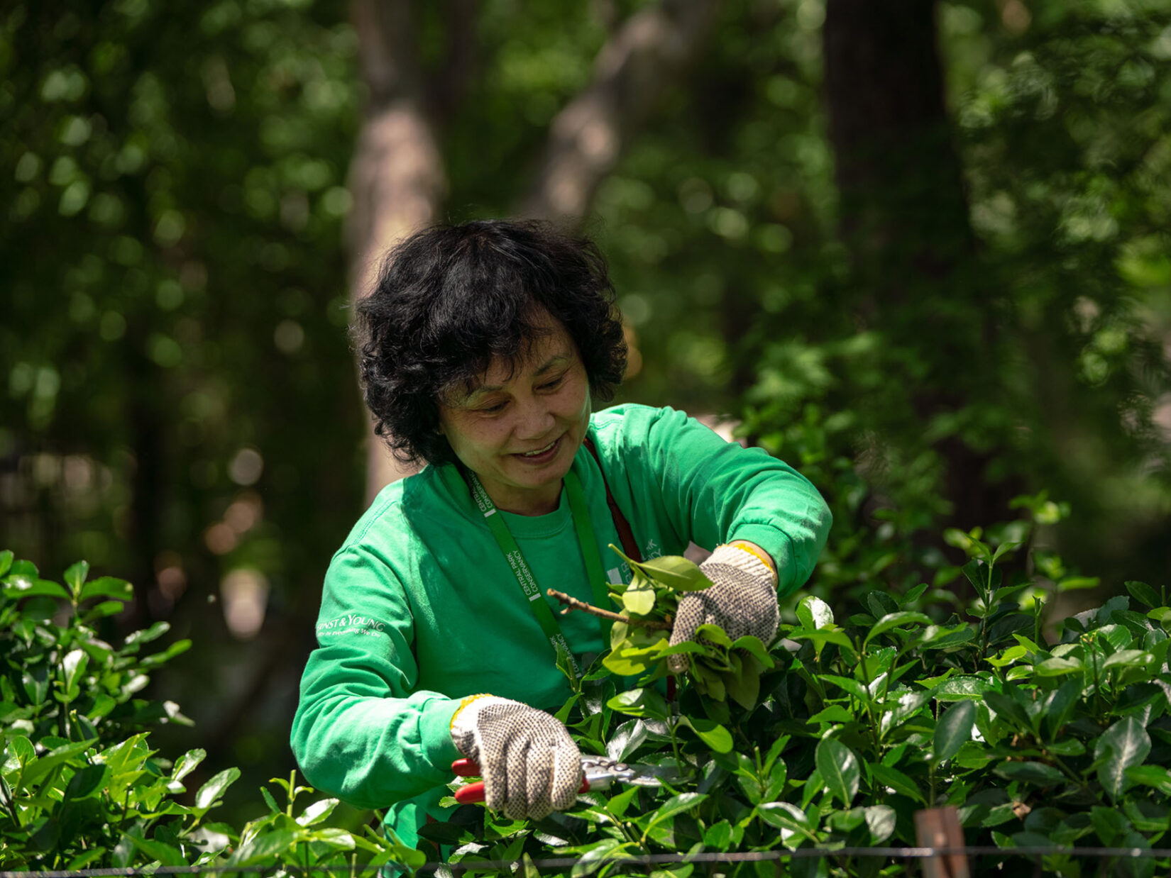A volunteer in a green Conservancy sweatshirt prunes a bush