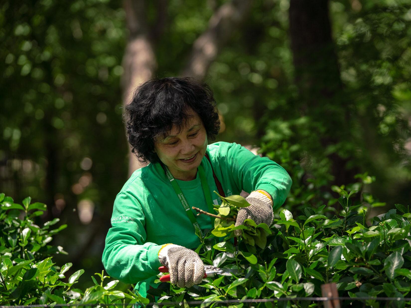 A volunteer in a green Conservancy sweatshirt prunes a bush