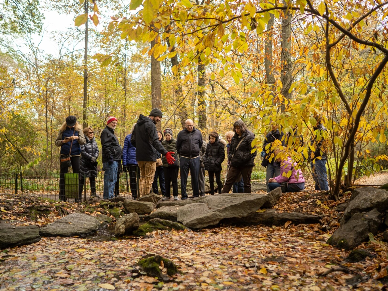 A tour group pauses in the Ramble to examine the topography and enjoy the late-autumn color of the leaves