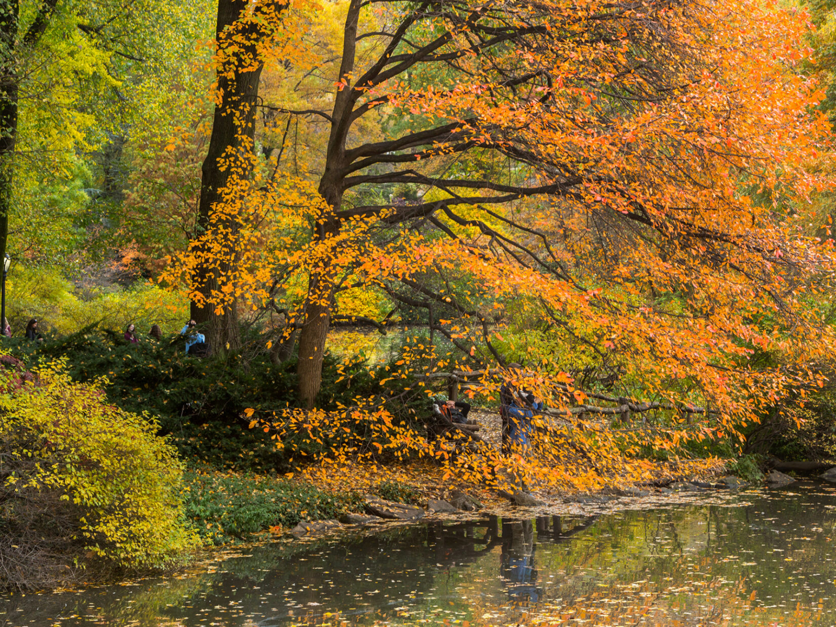 Autumnal leaves of rust and green are reflected in the water below