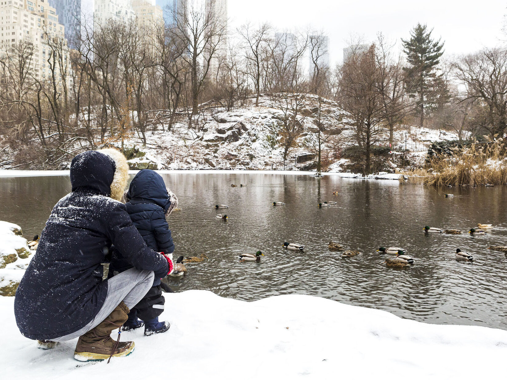 A parent and child, dressed for cold weather, on the snow-covered edge of the Pond, looking at ducks