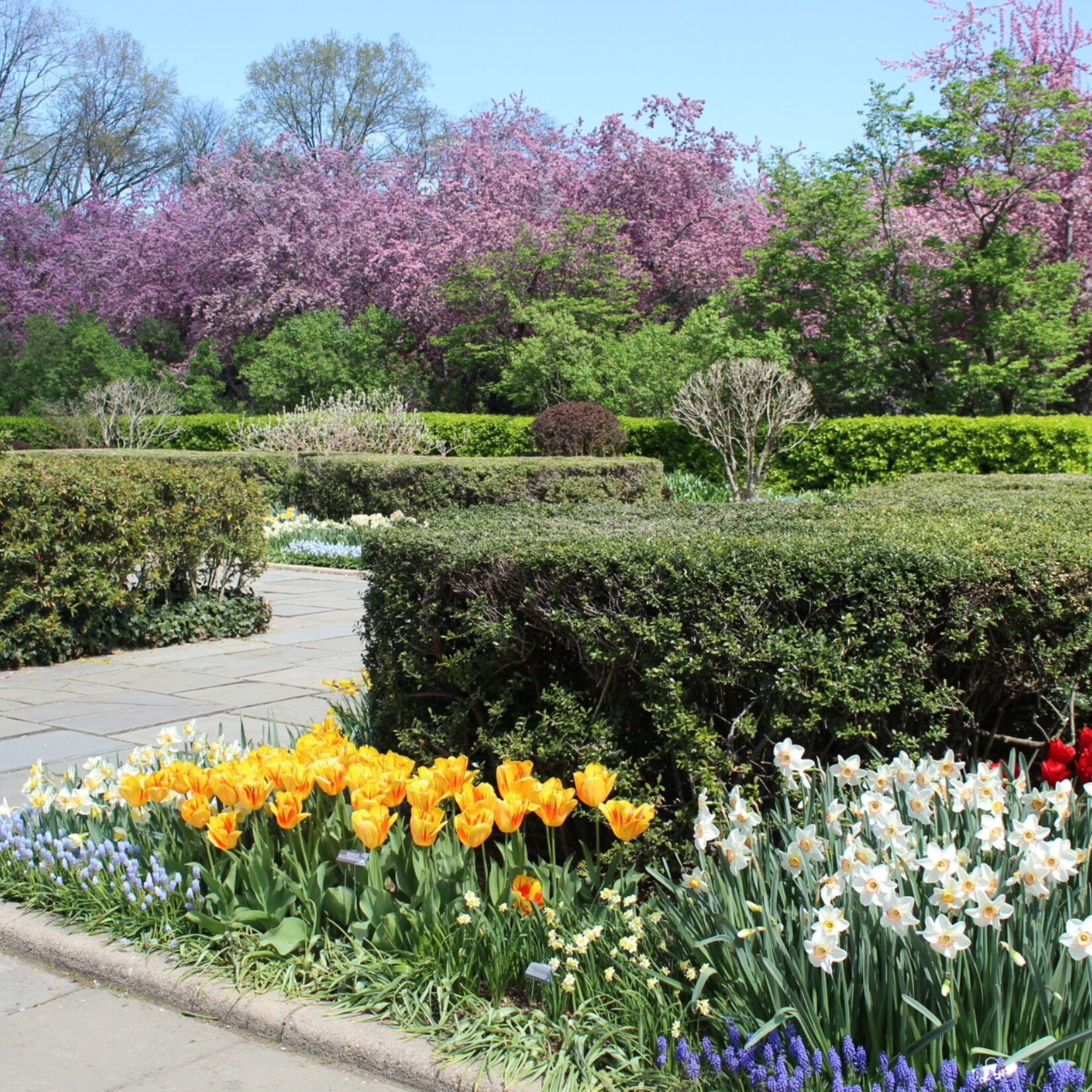 Manicured hedges are circled by tulips and daffodils and surrounded by a generous walkway.
