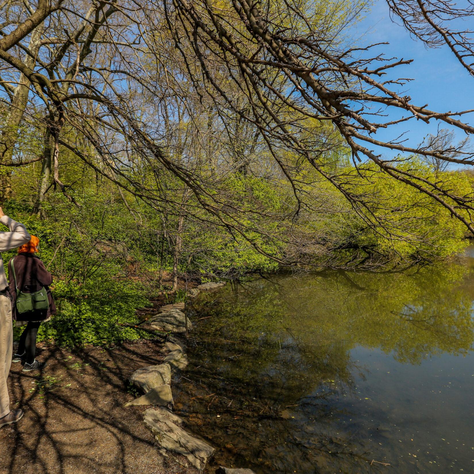A birder using binoculars on the shore of the Lake