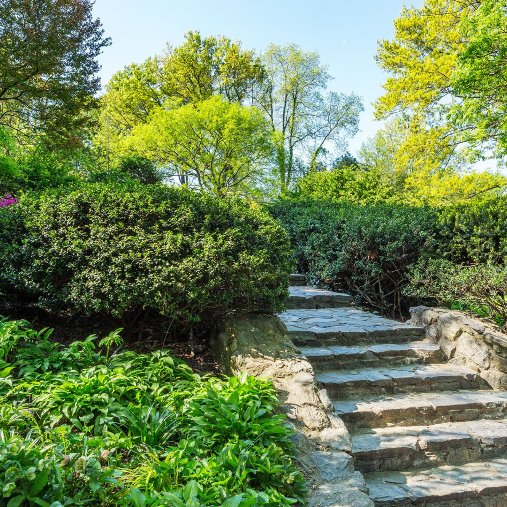 The stone steps of Shakespeare Garden, lined by pruned shrubbery and flowers