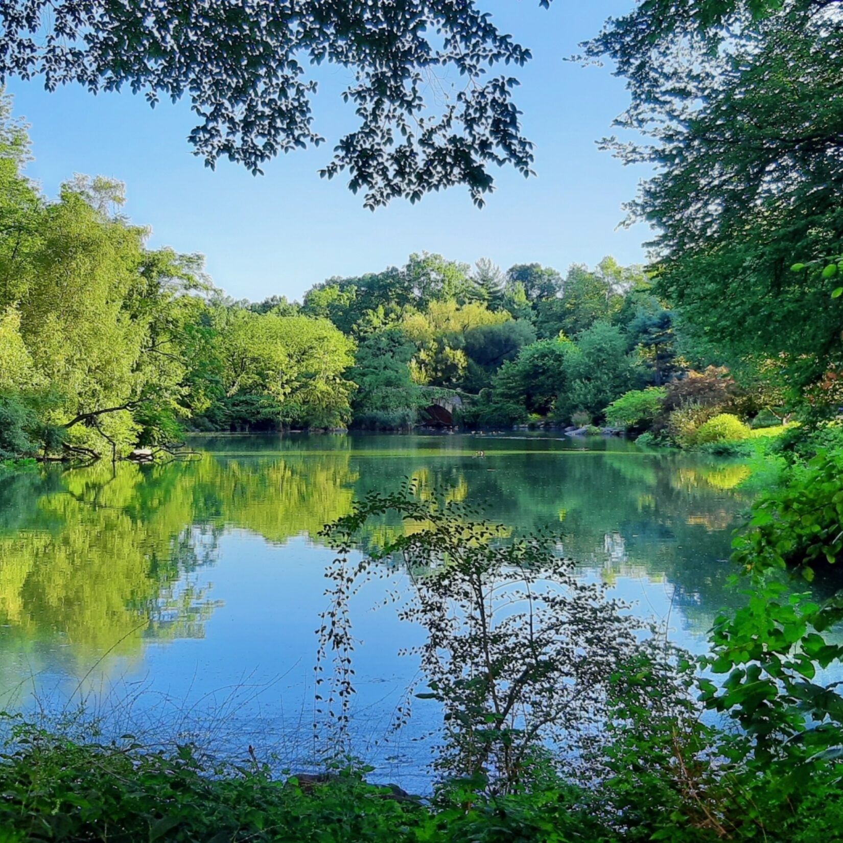 Green trees are reflected on the placid water under summer skies