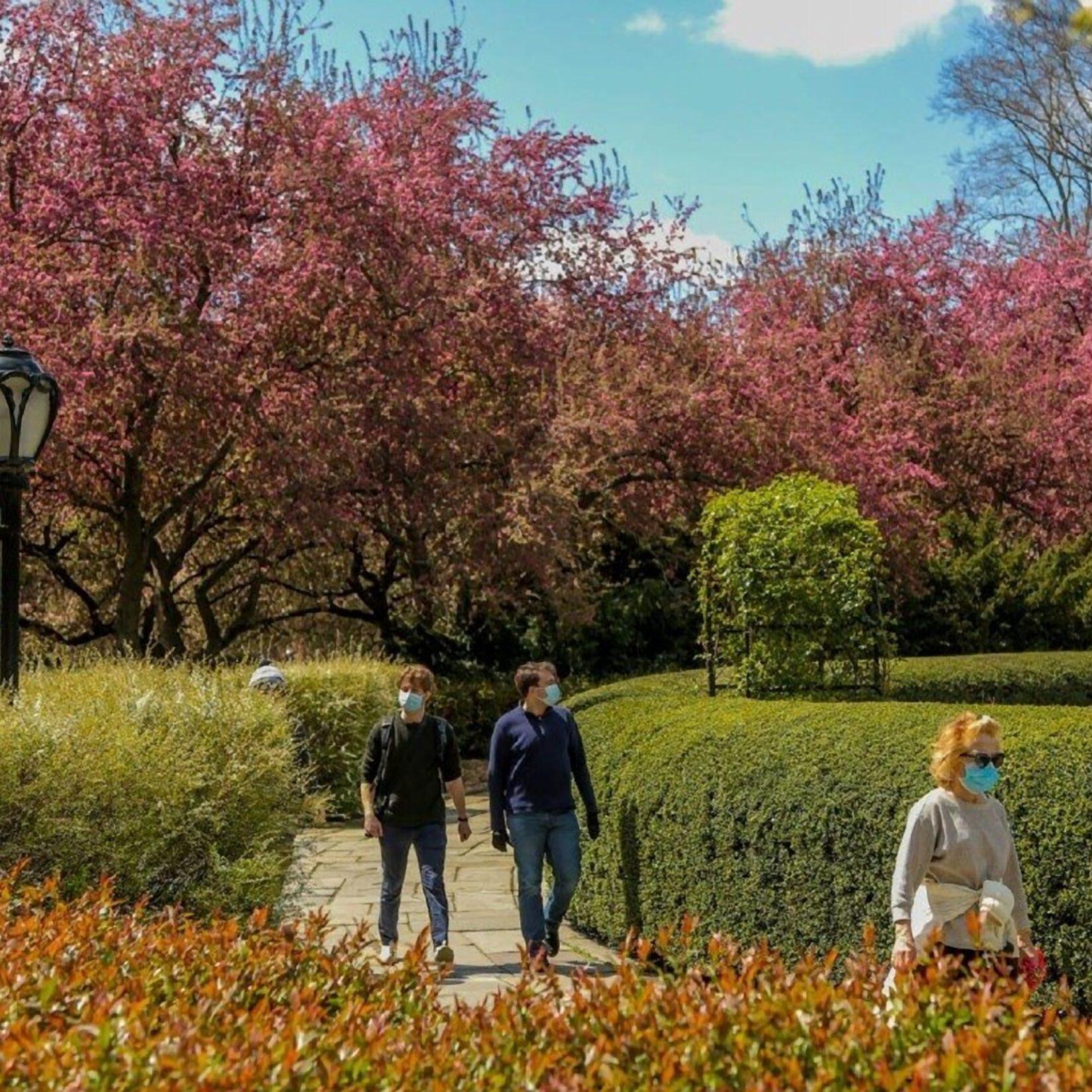 Socially-distanced strolling through a garden