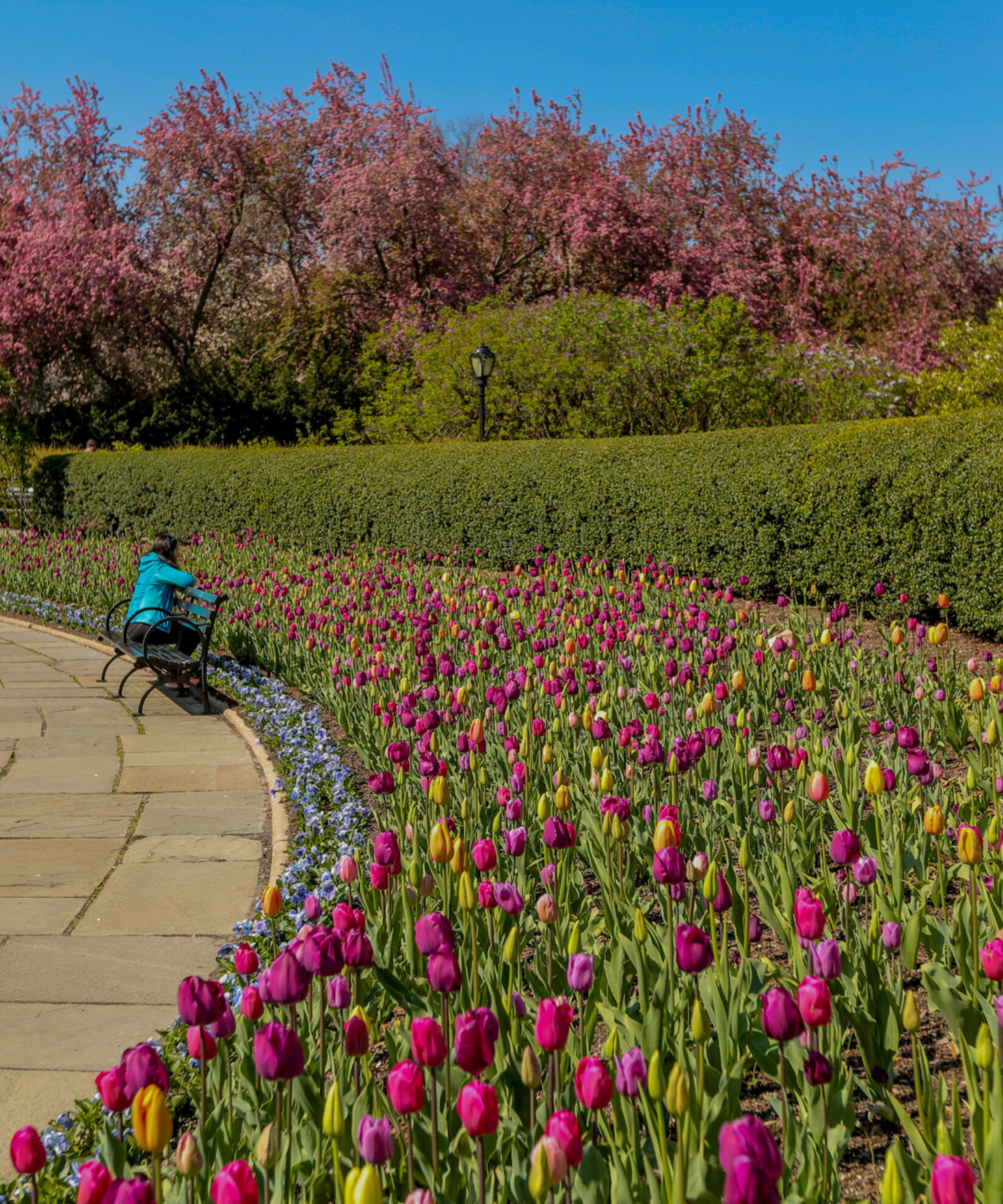 The sweeping curve of the circular garden crowded with purple and yellow blooms.