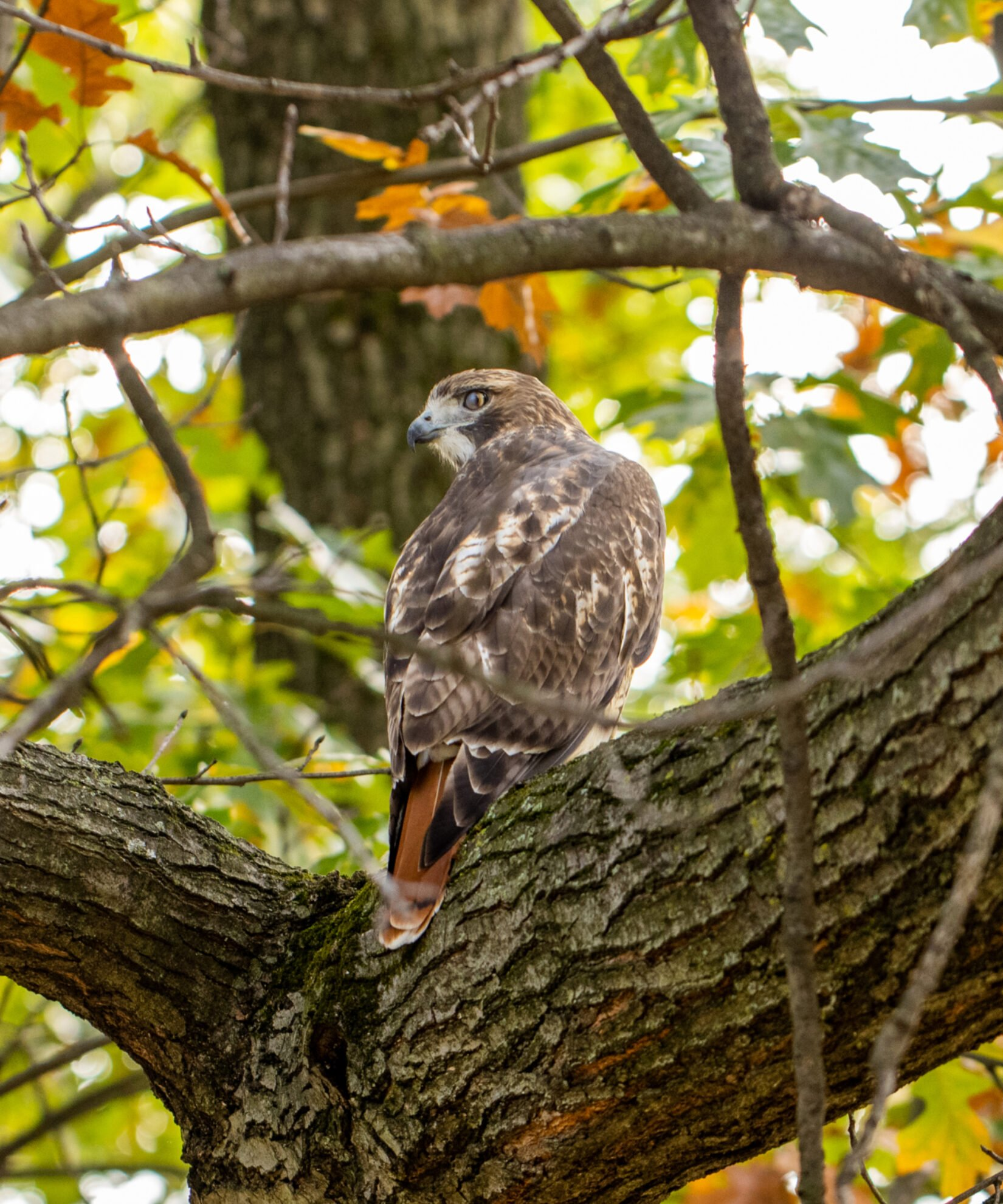 The noble bird perched on a branch in Autumn