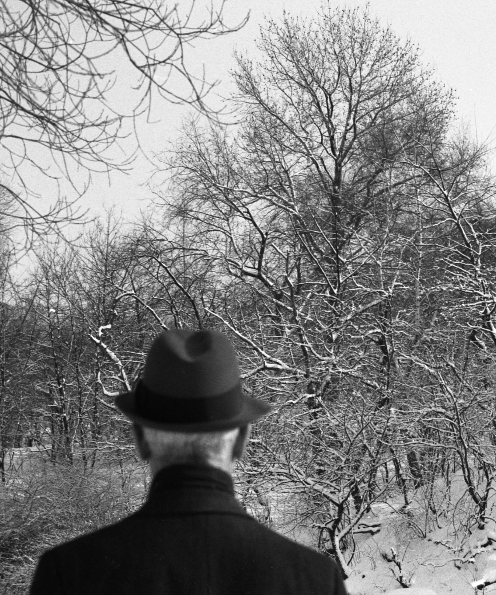 A black-and-white view of a Park landscape in winter, looking past a man taking in the scene