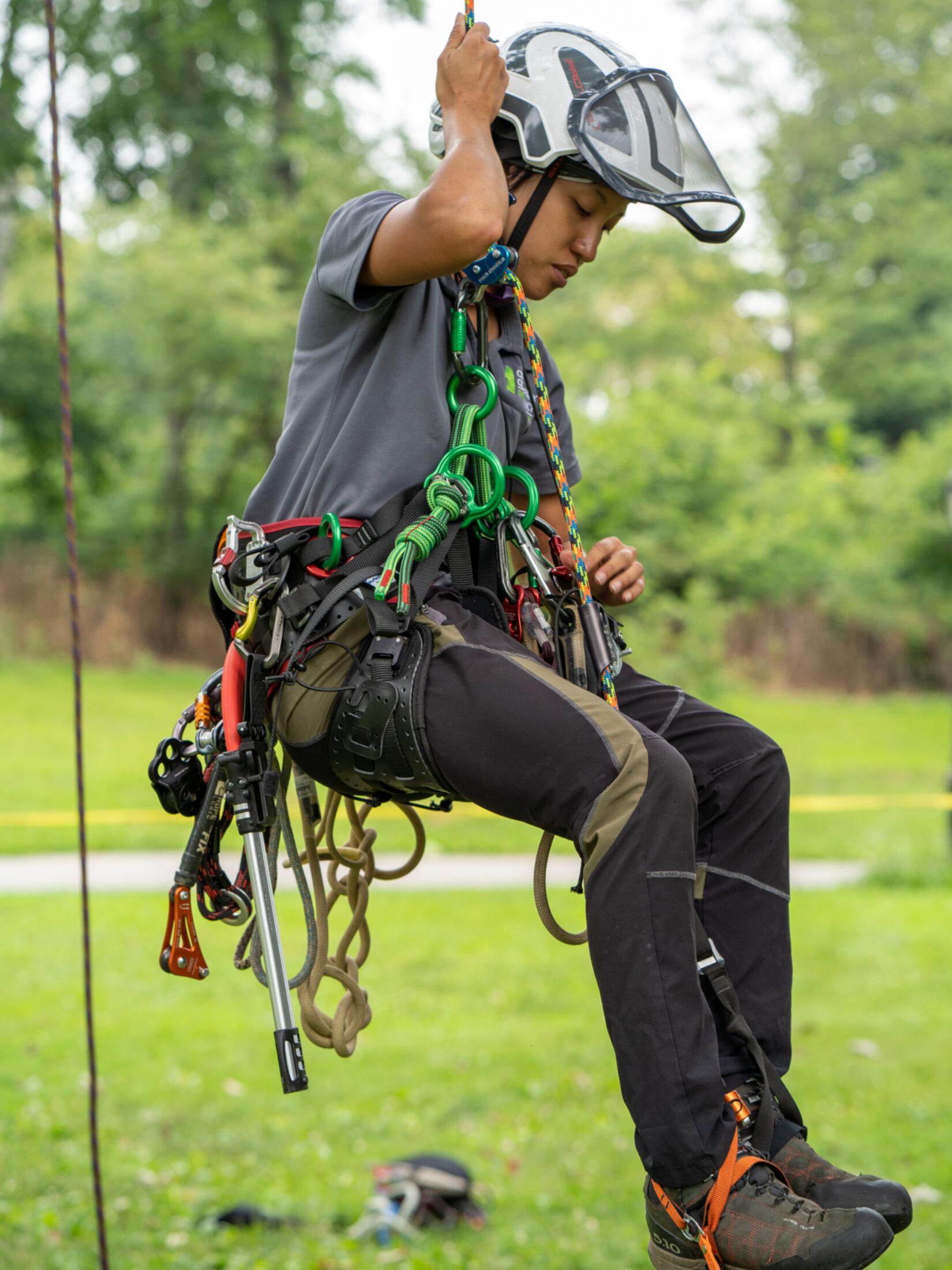 Arborist Jamie Lim, in tree-climbing harness, lowering herself to the ground