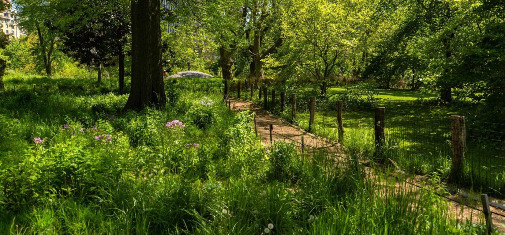 A fenced path runs through the lush, natural meadow