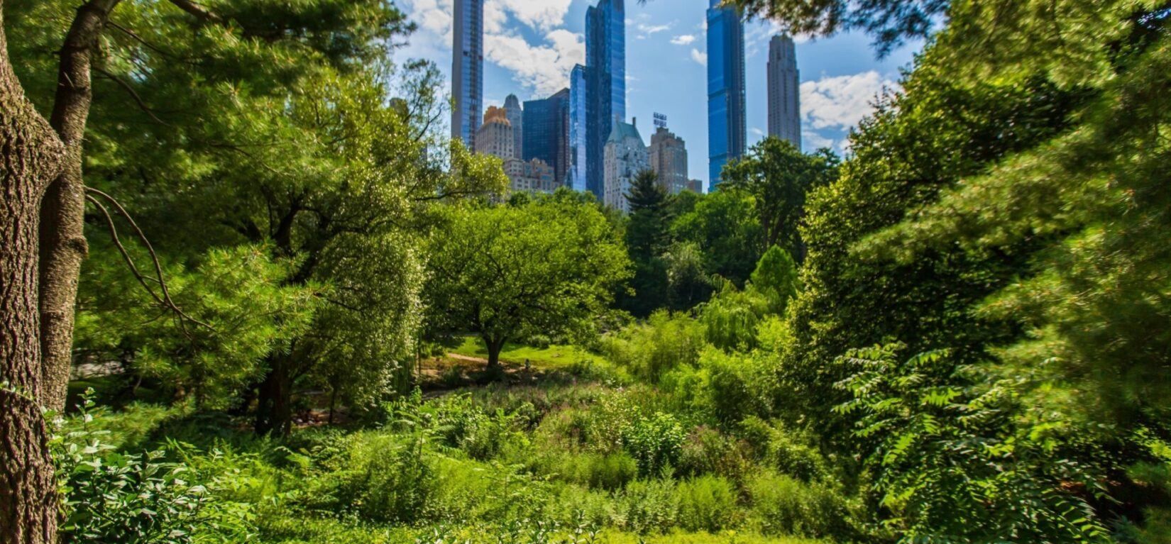 The spires of Midtown are seen in the distance, framed by the cooling foliage of Central Park