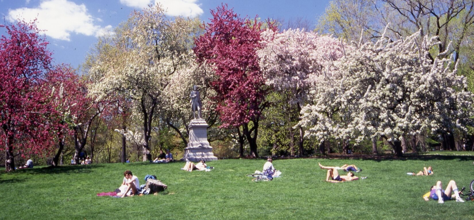 A row of trees in full spring bloom define a landscape scattered with lounging park goers.