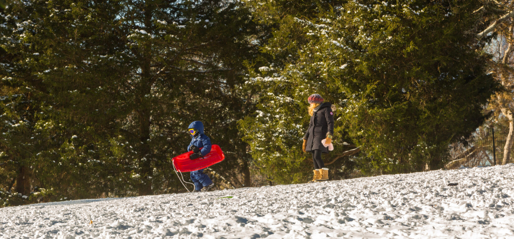 A child dressed for cold weather carries a red sled at the top of a snowy hill