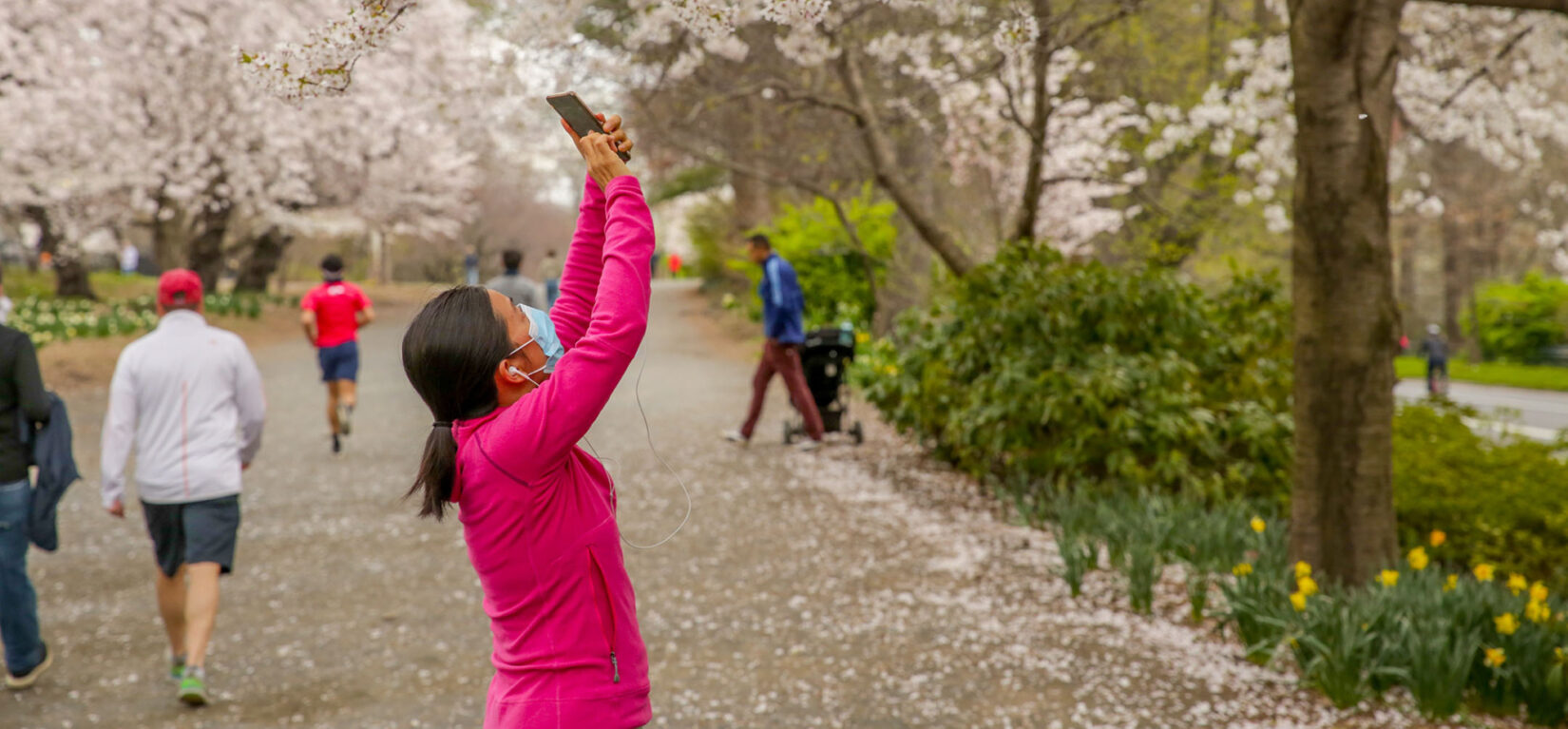 A woman wearing a mask takes photos of spring blooms on the bridle path
