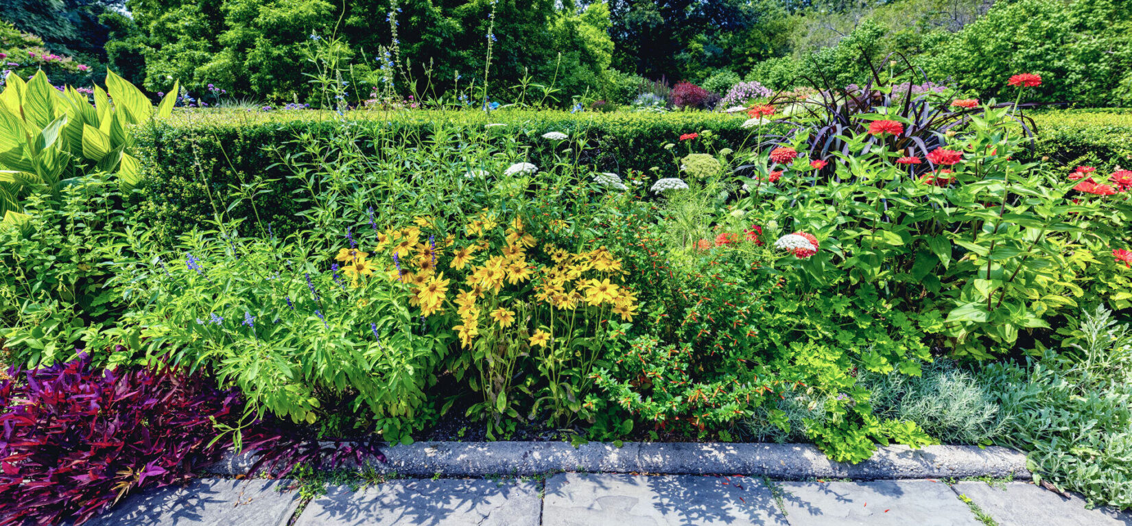 A colorful section of the garden featuring zinnias, geraniums, sage, and other flowers.