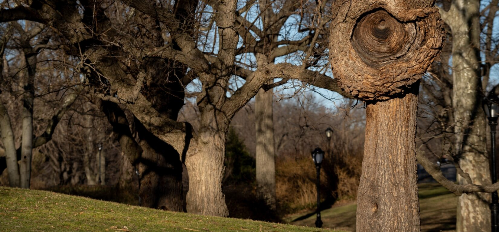 An interesting bark formation is the highlight of a shot of Frisbee Hill