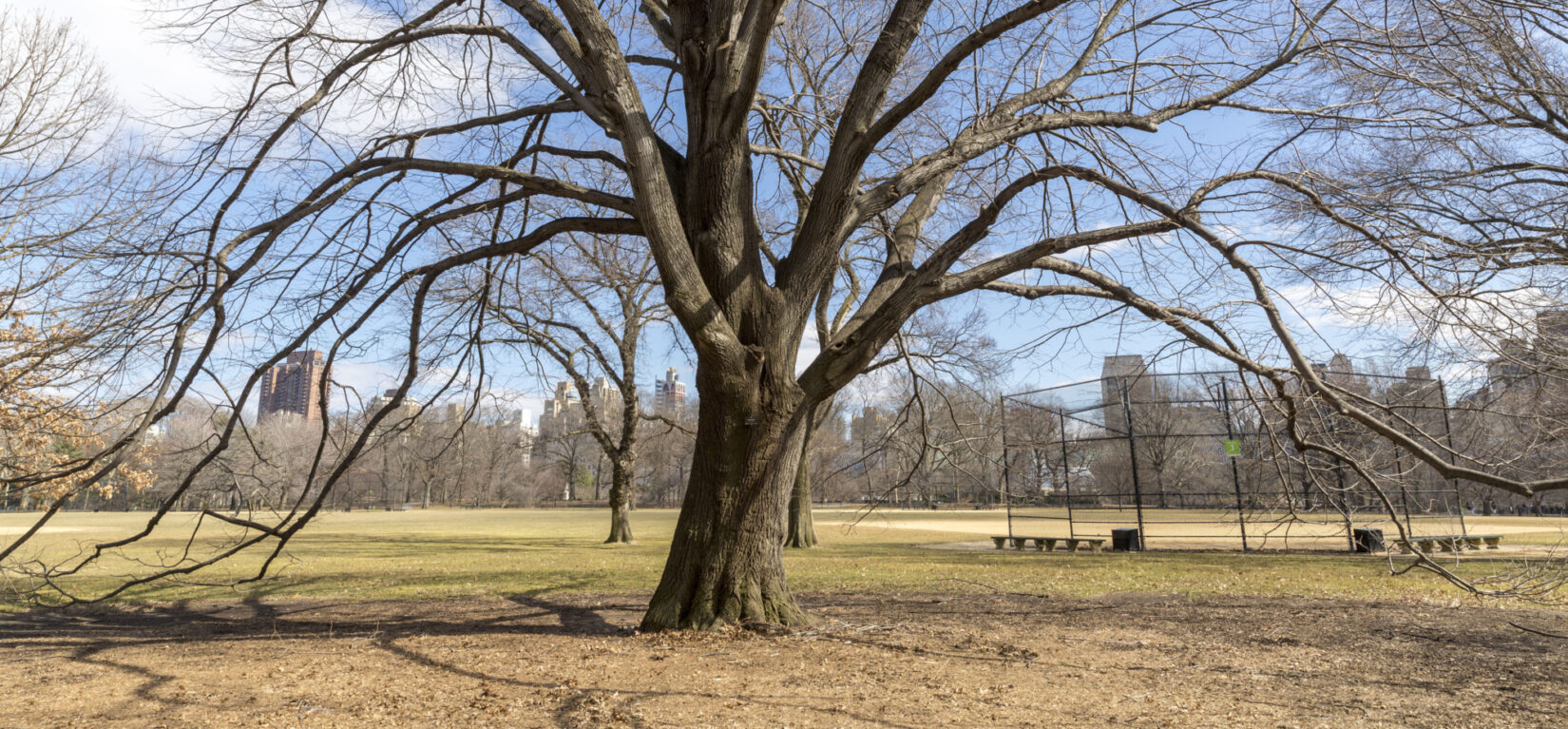 The Great Lawn seen through the barren branches of a tree in winter