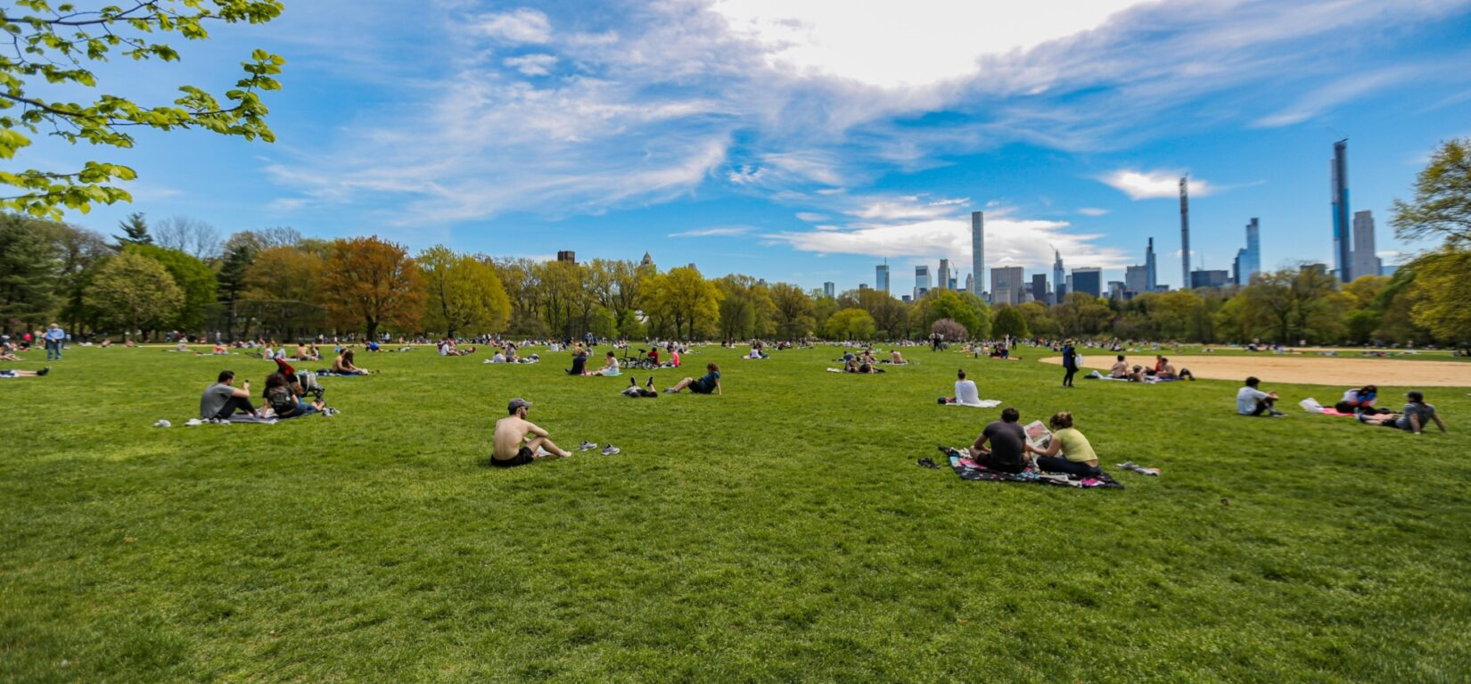 The Great Lawn in summer, with the skyline behind it