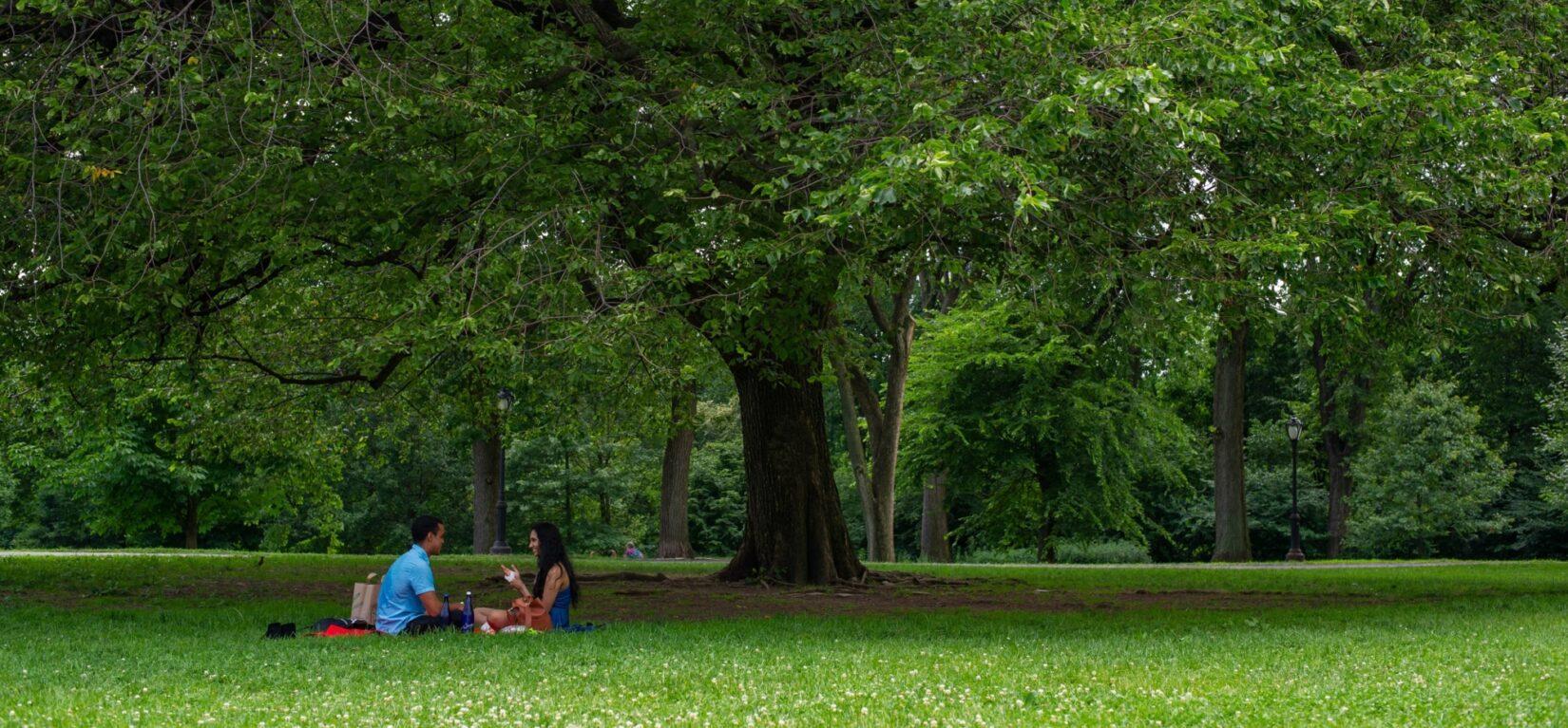 A couple picnics beneath the broad canopy of a leafy tree.