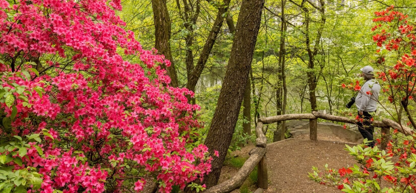 Brilliant red blossoms on either side of the rustic path that leads through the sanctuary