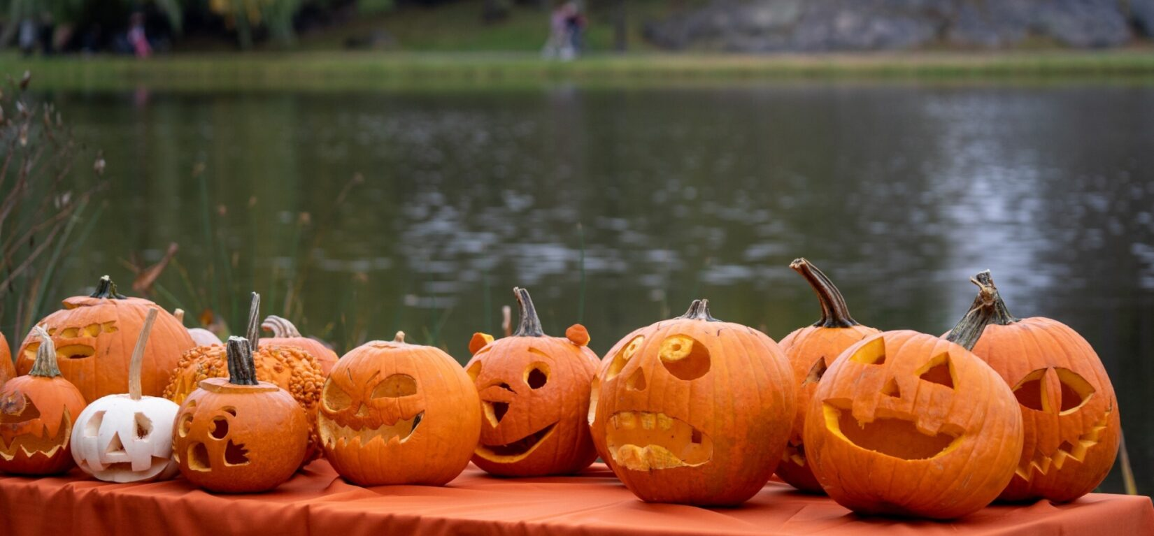 A variety of carved jack-o-lanterns are clustered on a table with the Meer as a backdrop.
