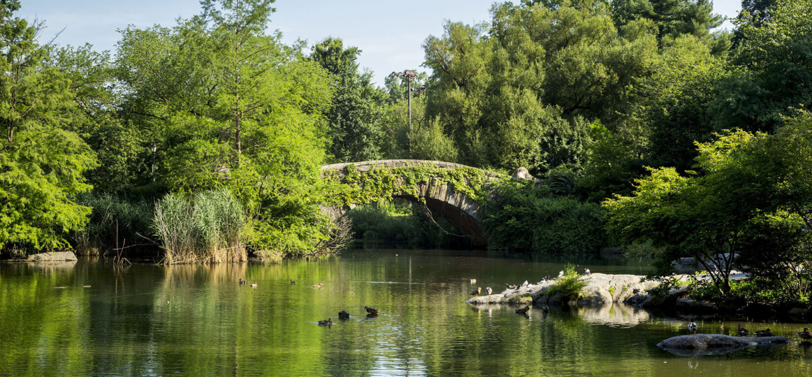 Happy 164th Birthday Central Park