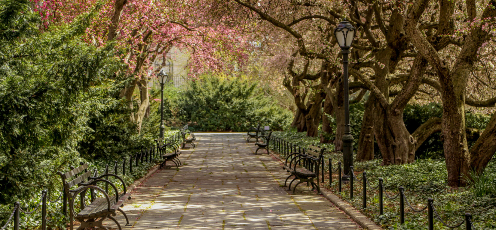 A shaded allee at Conservatory Garden