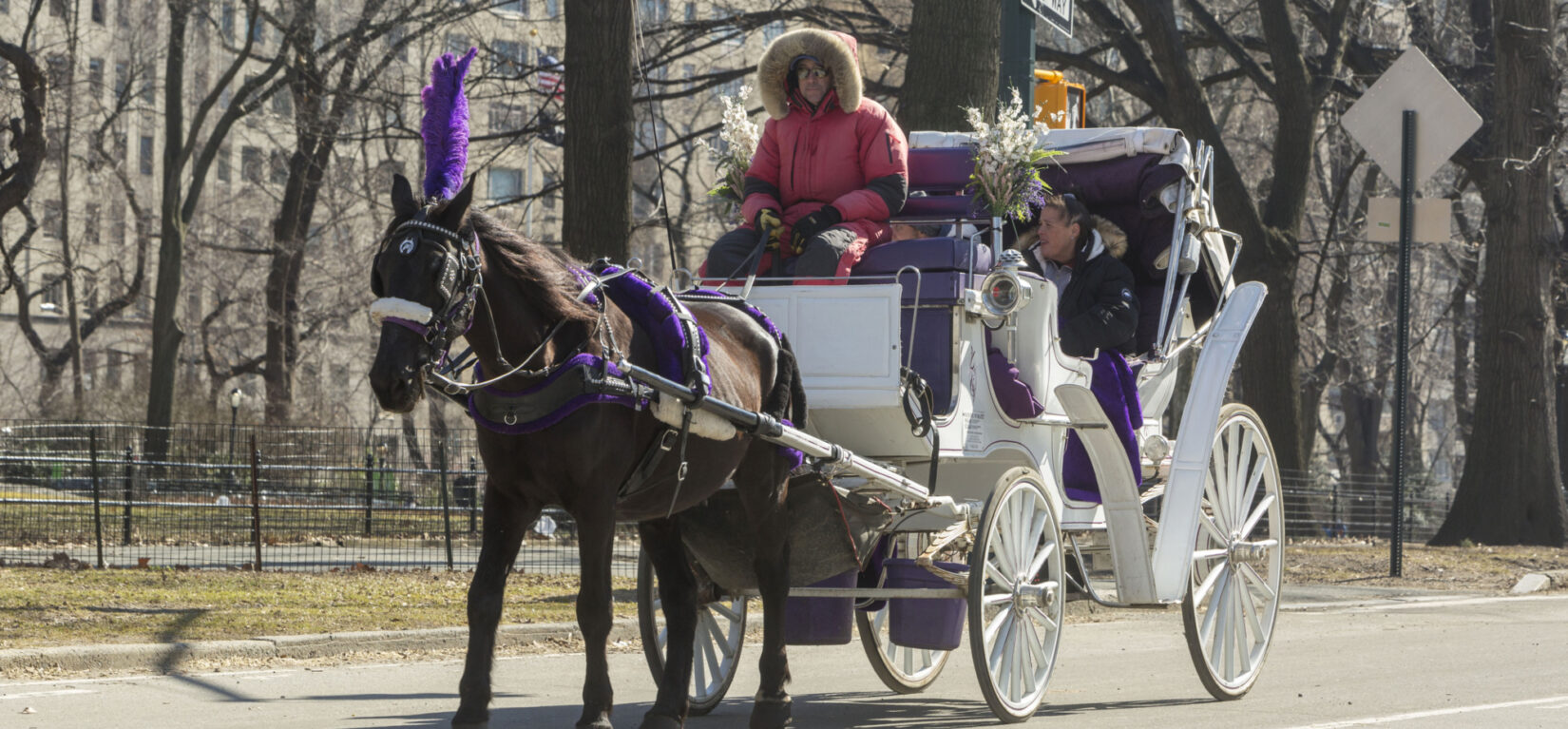 A horse pulls a white carriage down the roadway on a crisp winter's day