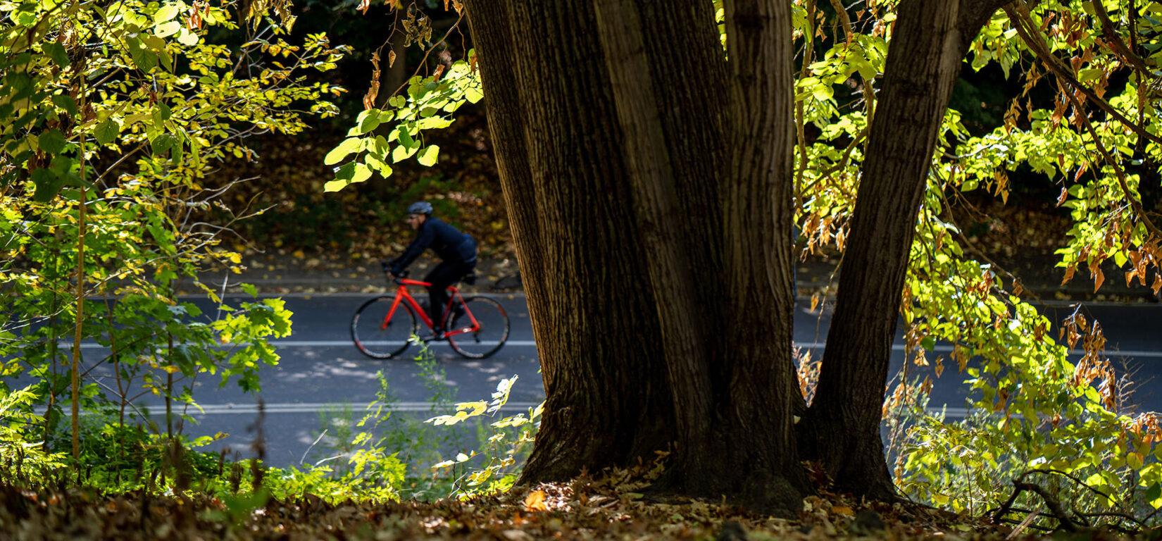 How Central Park Keeps New York City Healthy