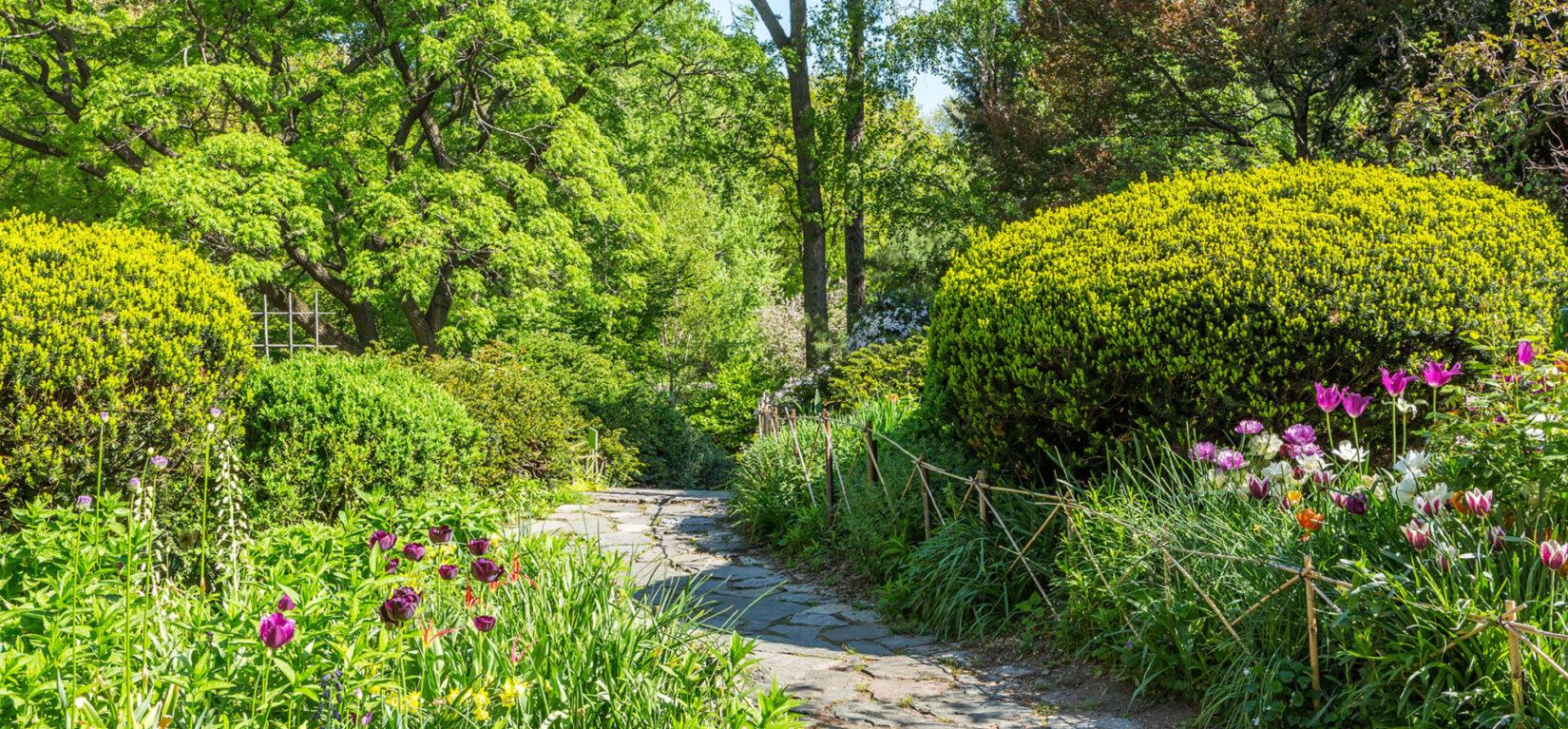 Shakespeare Garden on a sunny spring day