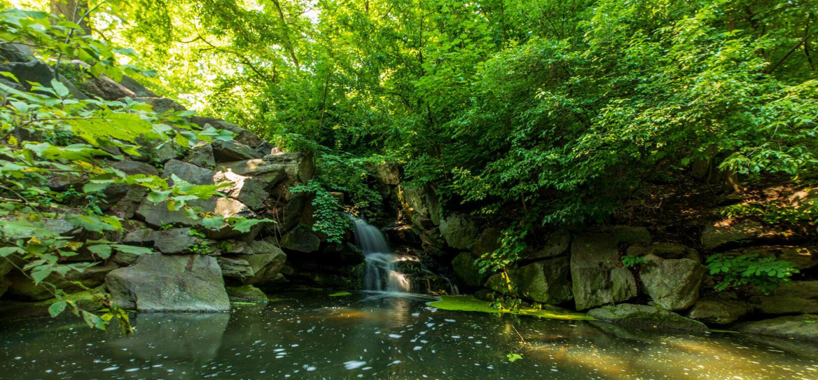 Improving Central Park in 2017