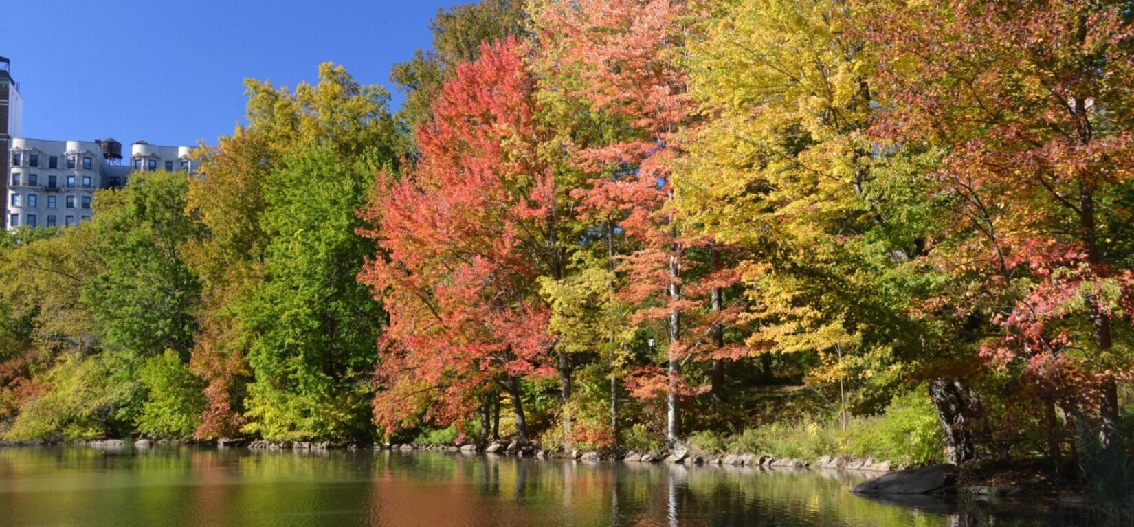 Trees in autumn colors line the bank of the Pool.