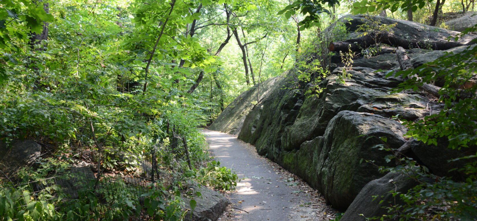 A path winds through the Ramble, seen in summer