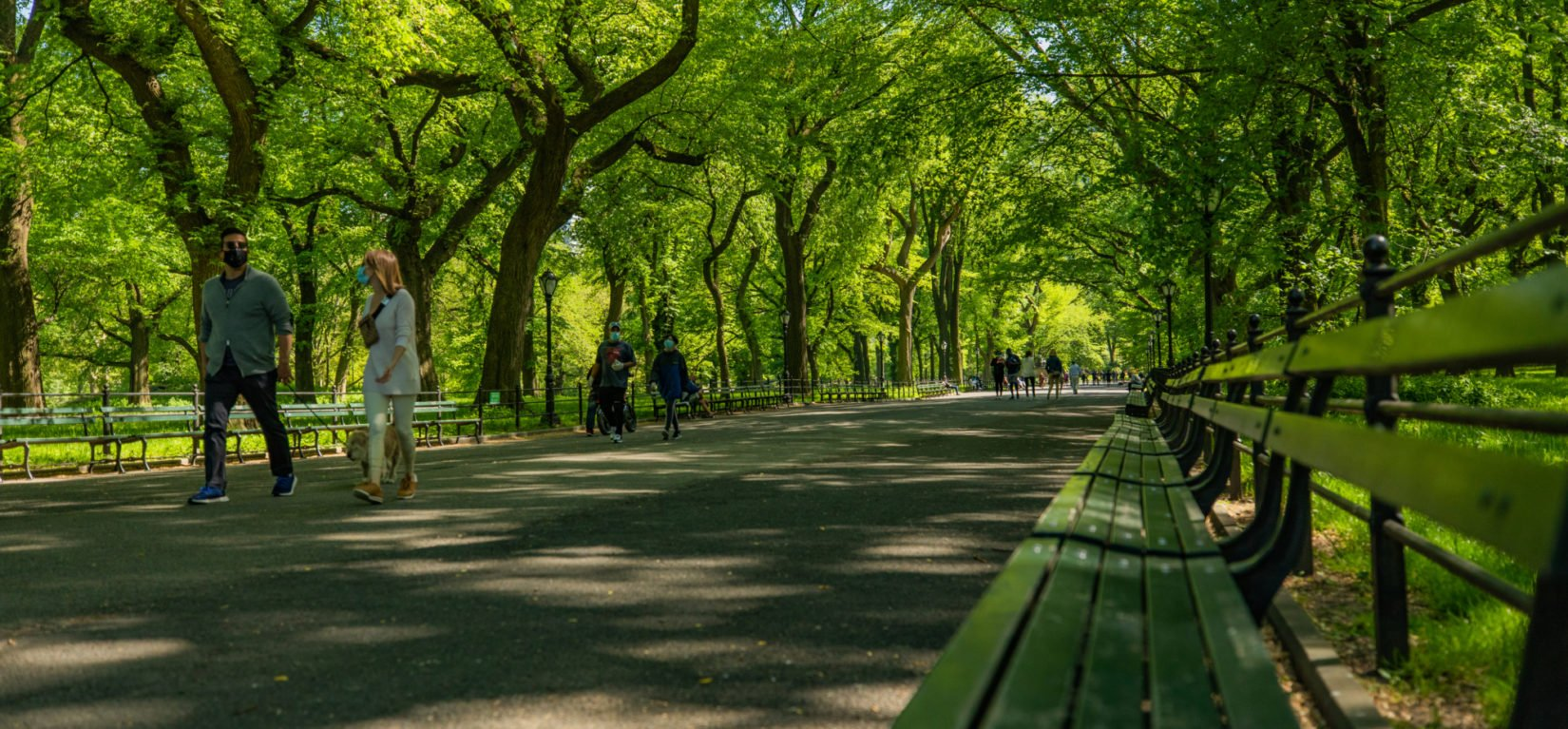 A view looking down the Mall under a canopy of elm trees