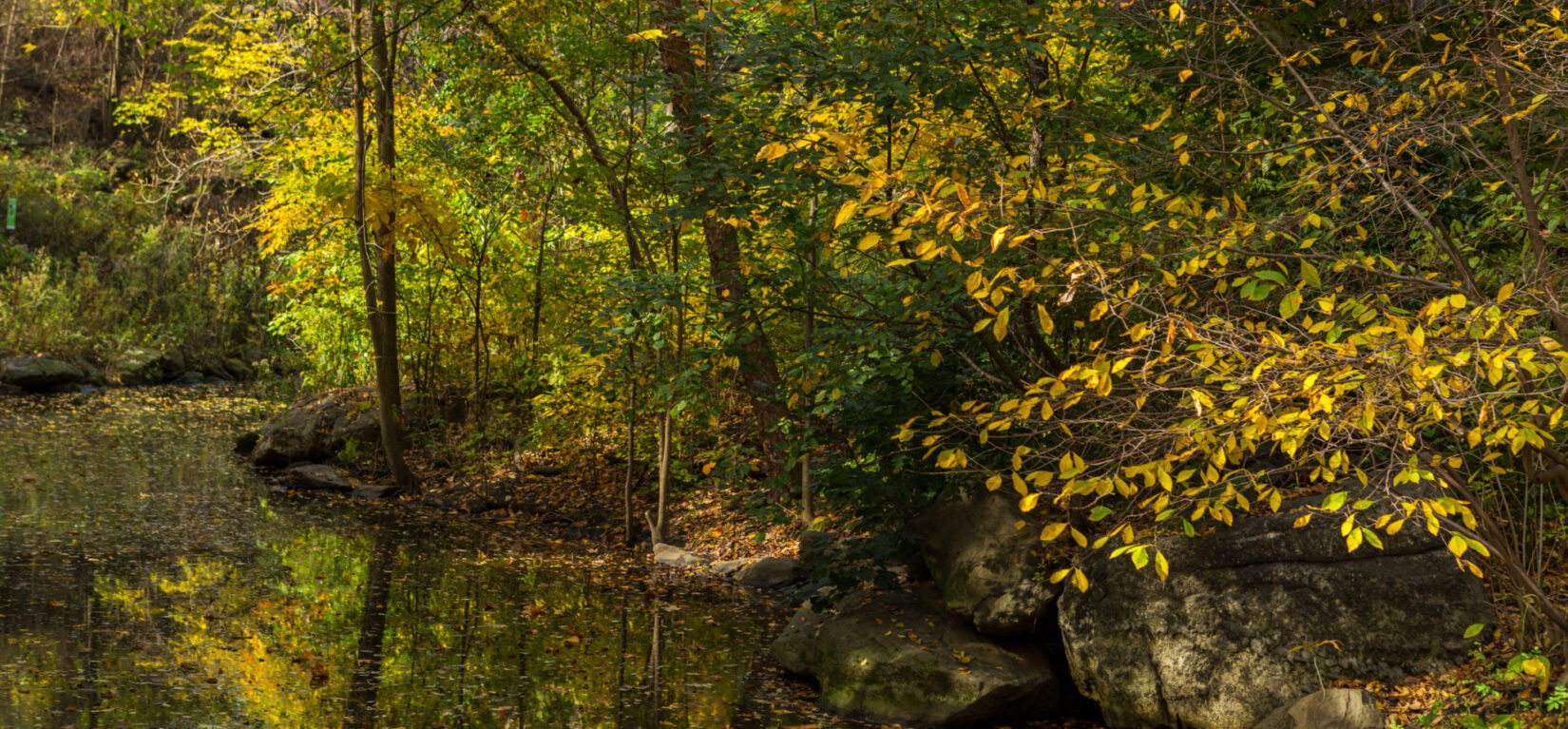 A stream reflecting autumn leaves in the North Woods