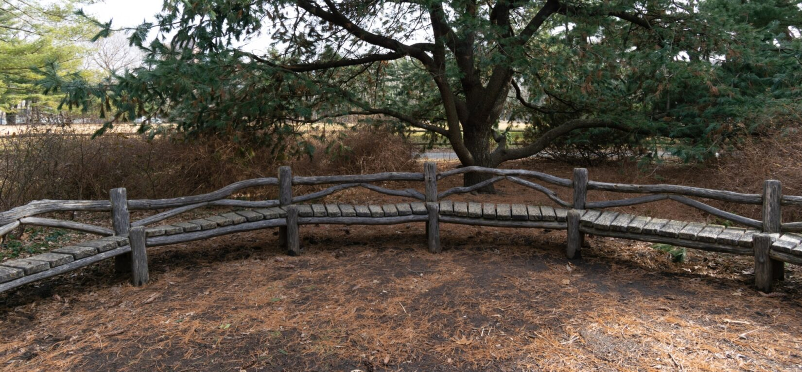 A rustic bench provides a vantage point from which to enjoy the Arthur Ross Pinetum
