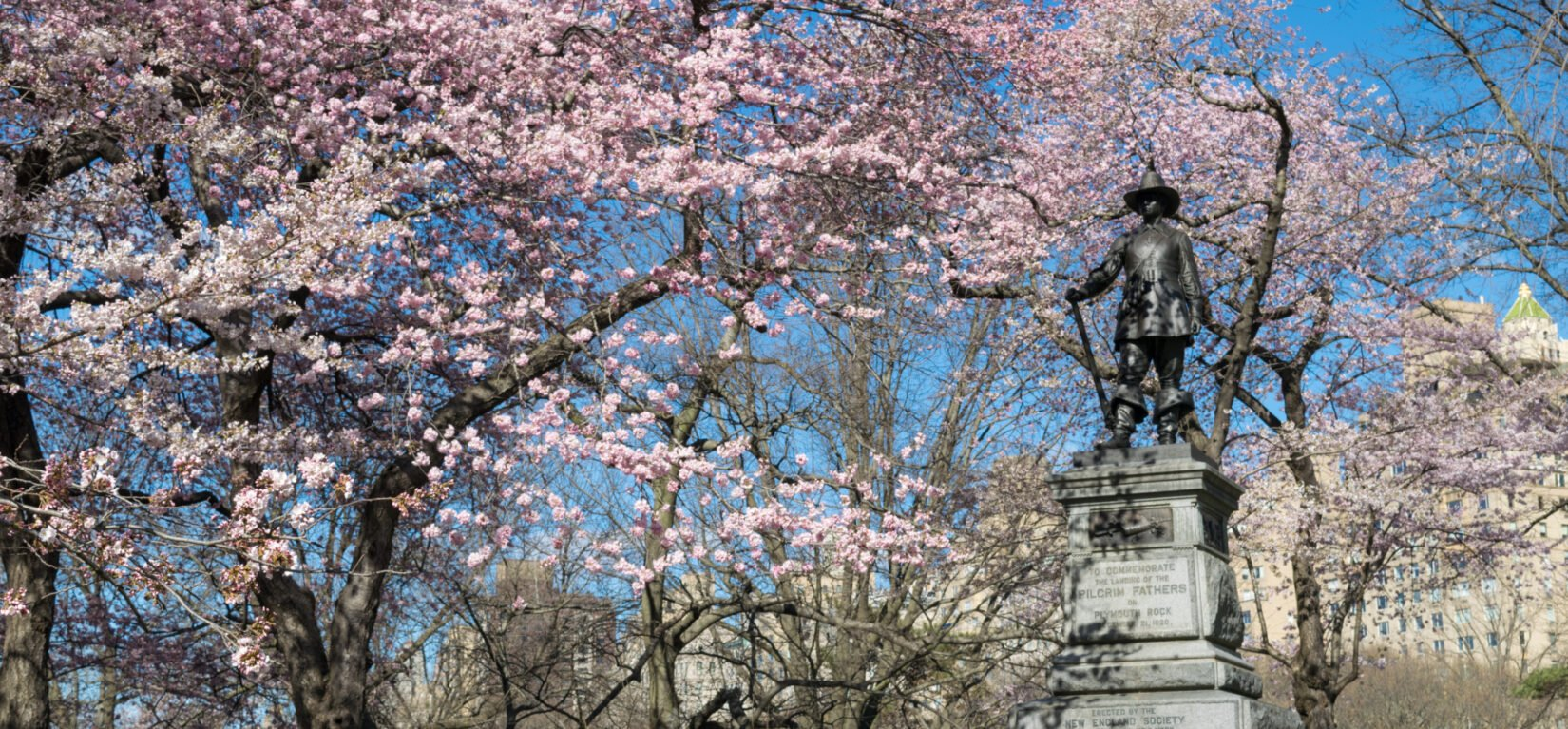 The statue is pictured atop Pilgrim Hill surrounded by cherry blossoms