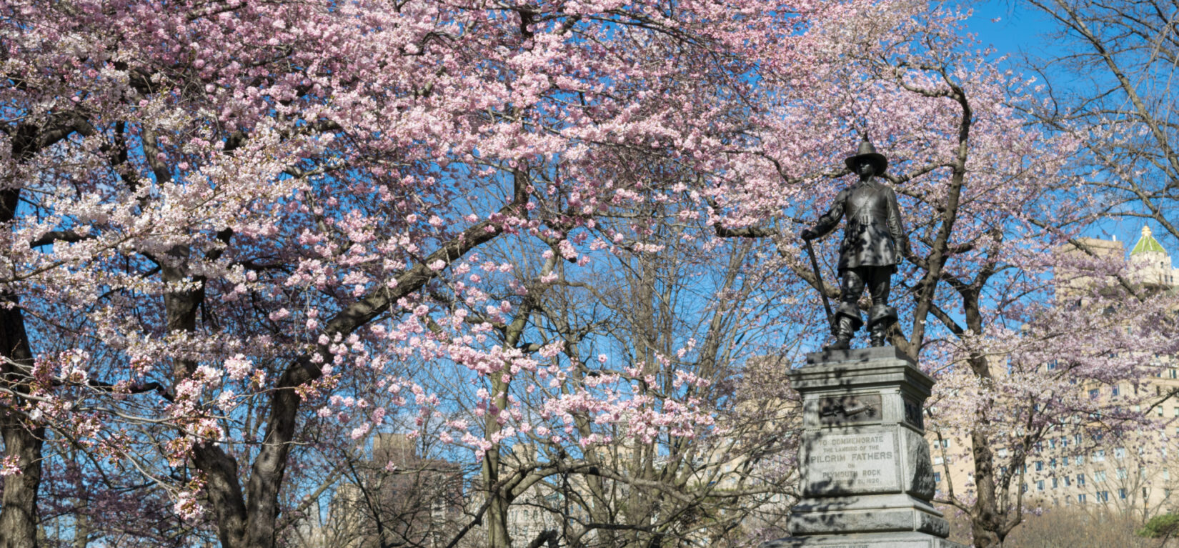The Pilgrim statue atop its Hill, surrounded by cherry blossoms.
