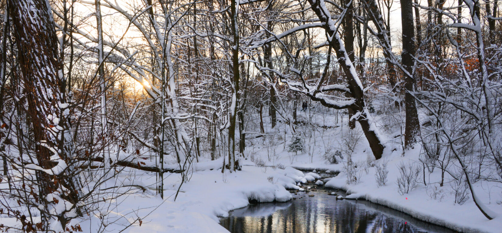 Ravine Winter 8430