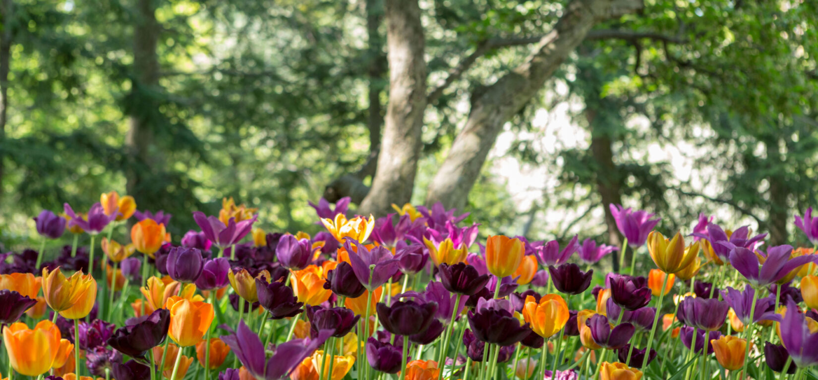 The colorful blooms of Shakespeare Garden