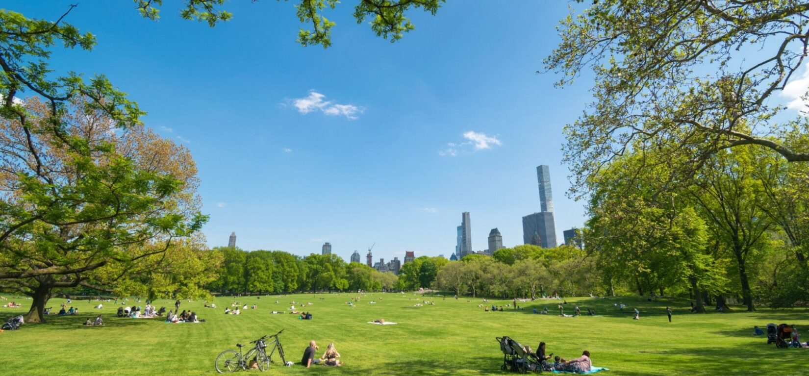 Park goers are scattered across the Sheep Meadow under a blue summer sky