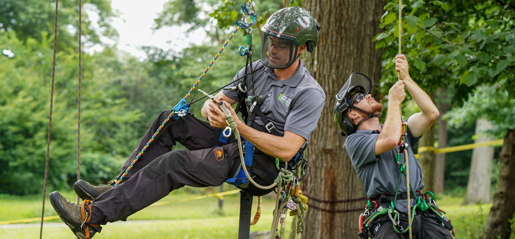 Two arborists in protective gear, suited up in climbing equipment and hoisting themselves into the air