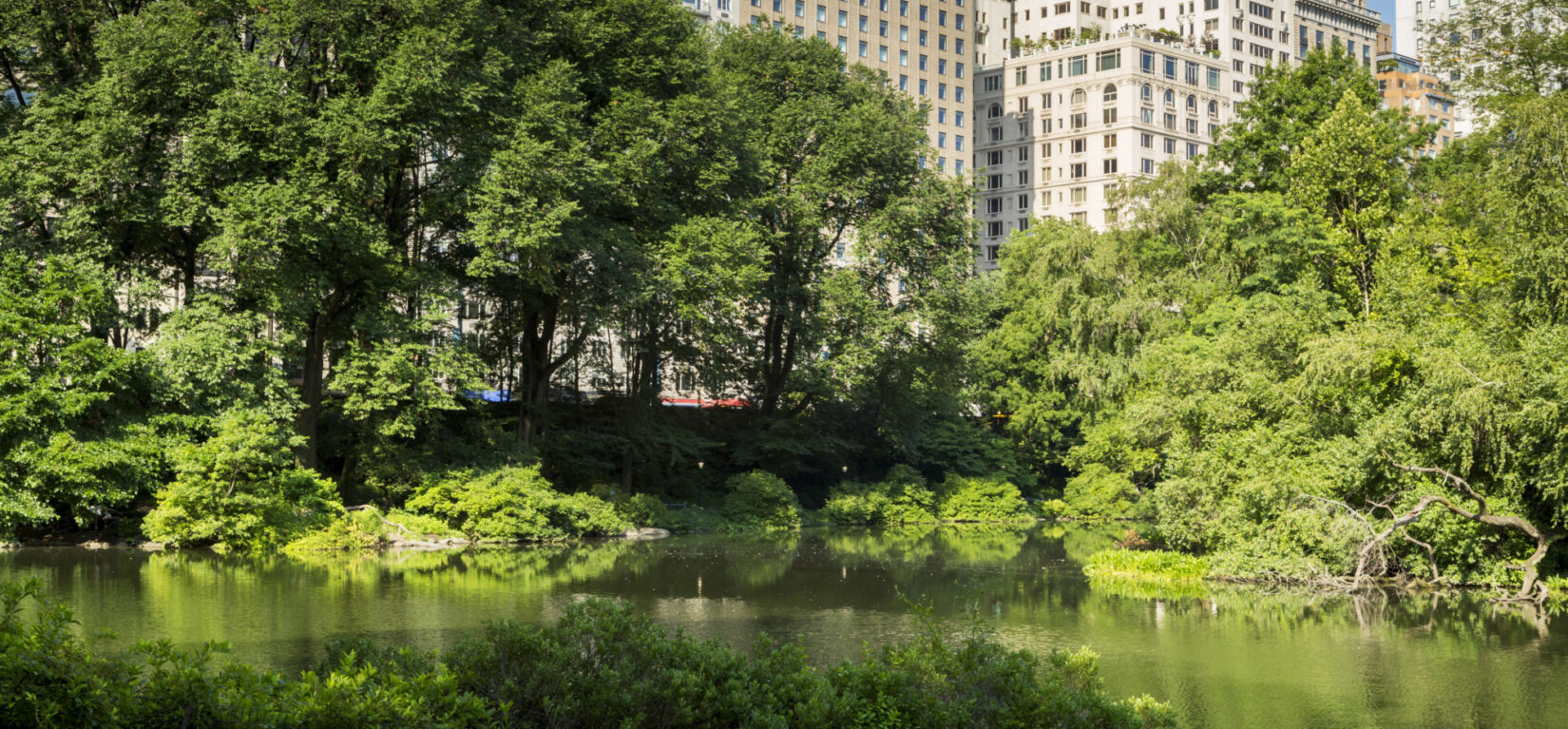 A view of the Pond with the buildings of Fifth Avenue in the background