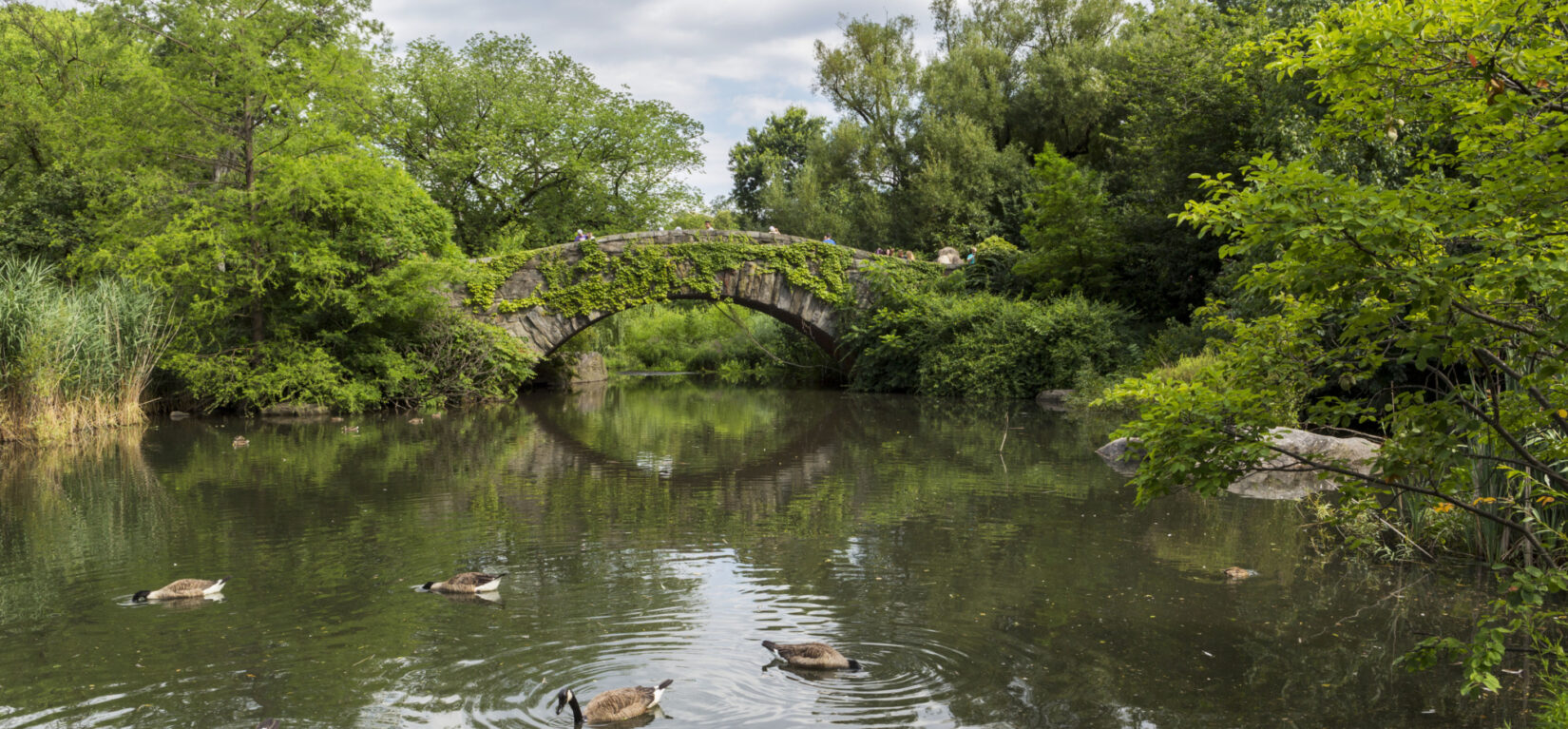 Ducks enjoy the placid waters of the Pond in summer.