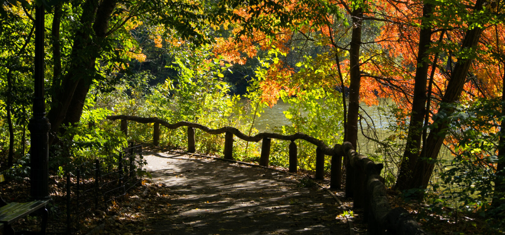 Colorful leaves and autumn light enliven this view of a path through the Ramble