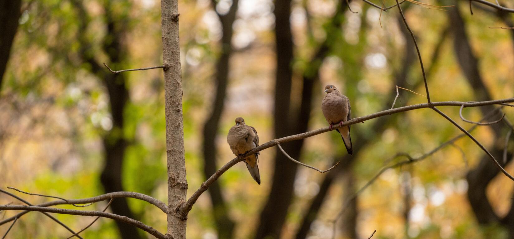 The Ramble Birds 20191110 02320